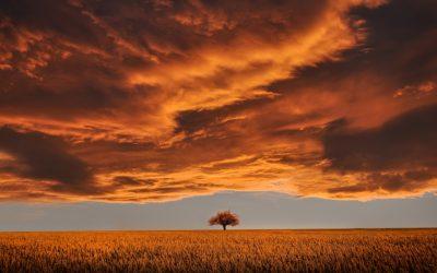 Mencegah Krisis Iklim Melalui Filosofi Ayam Geprek?